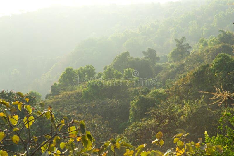Mystischer Dschungel lizenzfreies stockbild