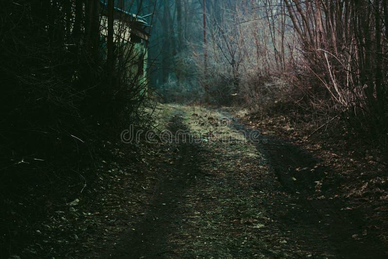 Mystischer dunkler Waldweg stockfotos