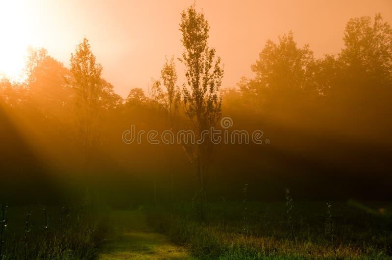 Mystischer Morgen Lizenzfreie Stockbilder