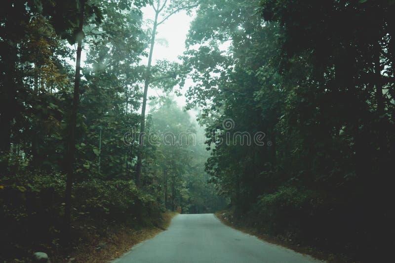 Mystischer nebeliger Waldweg im ersten Sonnenlicht Ländliche Landschaft der nass Straße des leeren Landschaftsschmutzes, die durc lizenzfreie stockfotografie