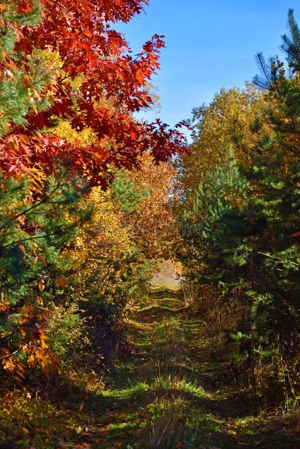 Mystischer Tunnel der Niederlassungen im Herbstwald lizenzfreies stockfoto