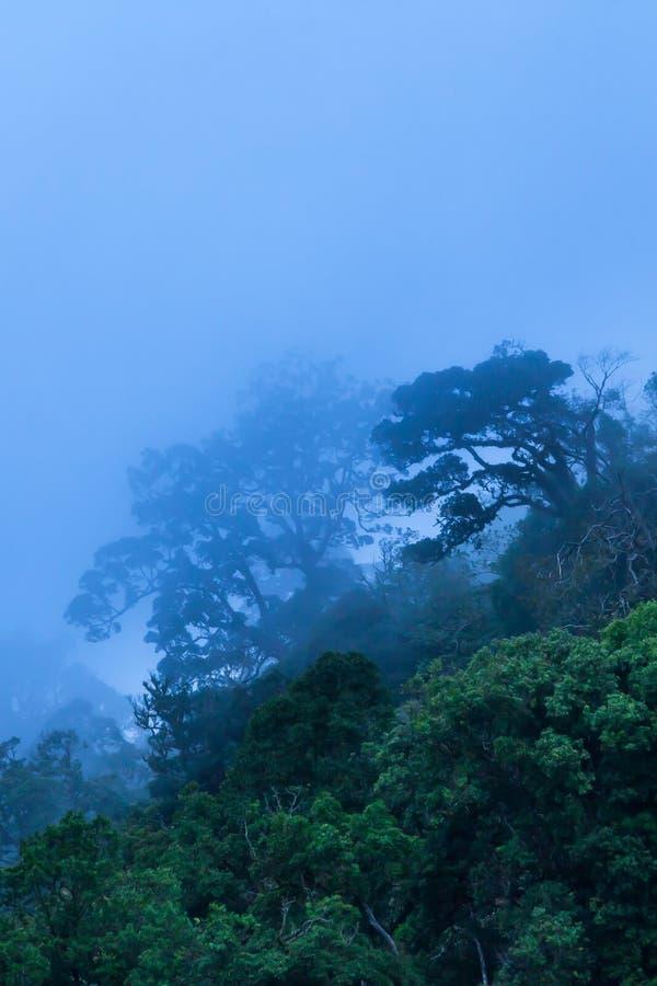 Mystischer Urregenwald im Blau nebelhaft an einem regnerischen Tag lizenzfreies stockbild