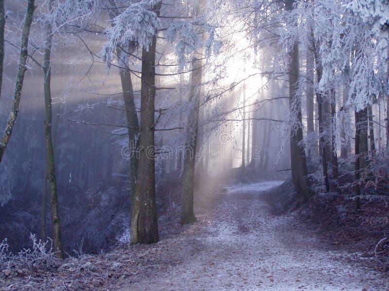 Mystischer Wald. lizenzfreies stockbild