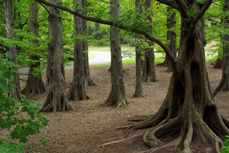 Mystischer Wald stockfotos