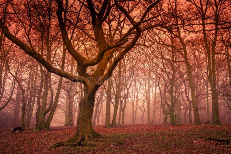 Mystischer Wald im Herbst stockbild