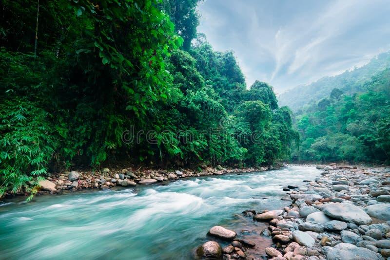 Mystisk bergig djungel av norr Sumatra, Indonesien royaltyfria foton