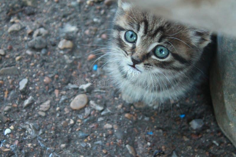 Mystisk blick av en gullig blåögd kattunge royaltyfri bild