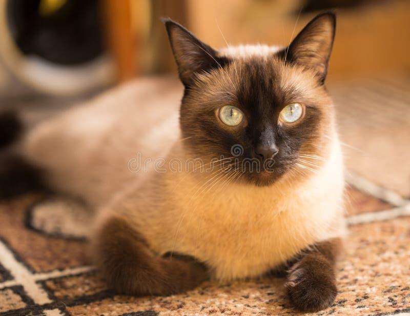 Mystisk blick av en katt royaltyfri bild