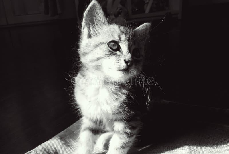 mystisk blick för kattunge royaltyfri fotografi