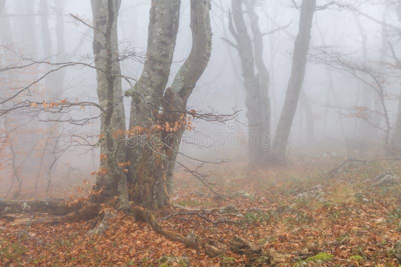 Mystisk dimmig höstforestt royaltyfri foto