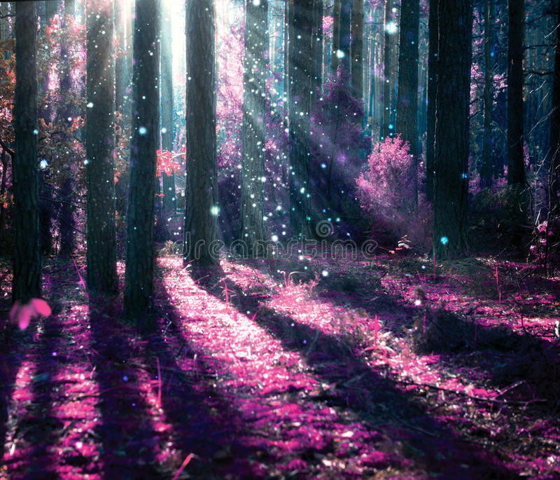 Mystisk gammal skog arkivbild