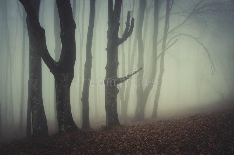 Mystisk läskig skog med dimma arkivbilder