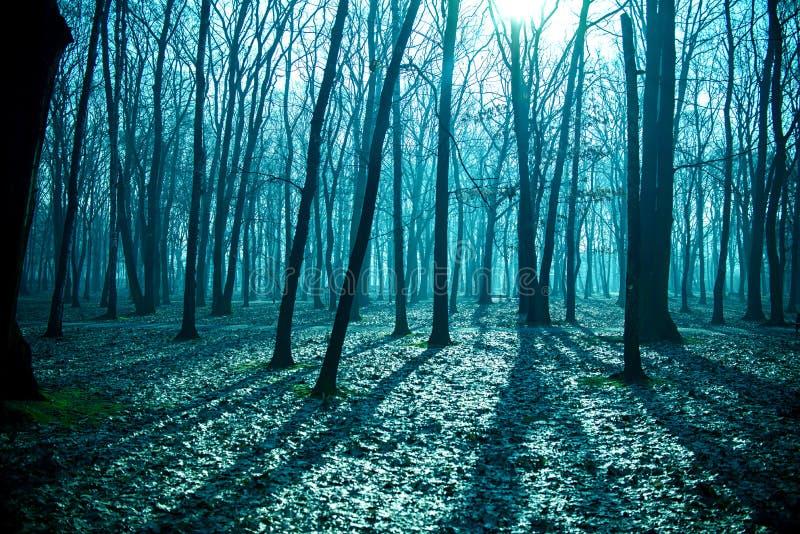 Mystisk mörk gammal skog i dimma, blå natt arkivbild