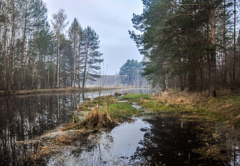 Mystisk morgontid i skog royaltyfri bild