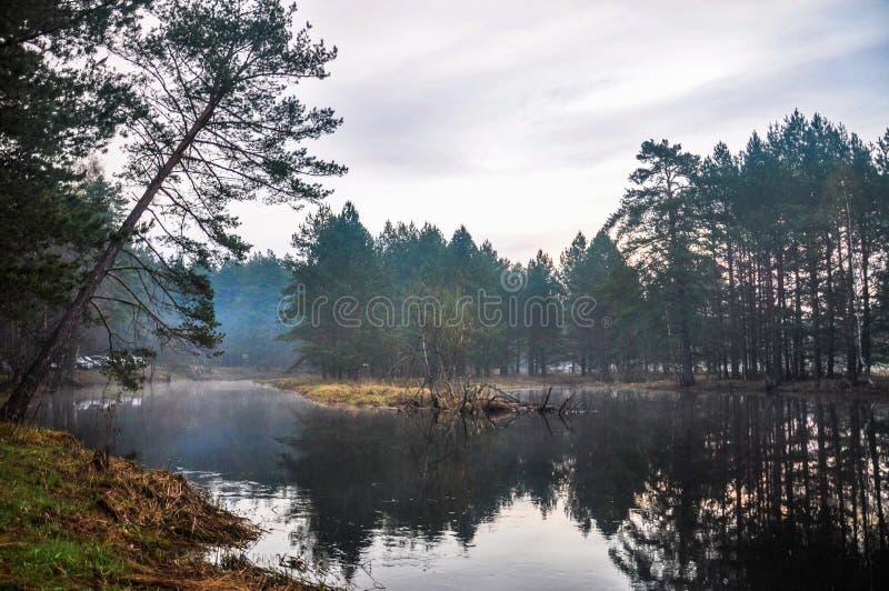 Mystisk morgontid i skog arkivfoton