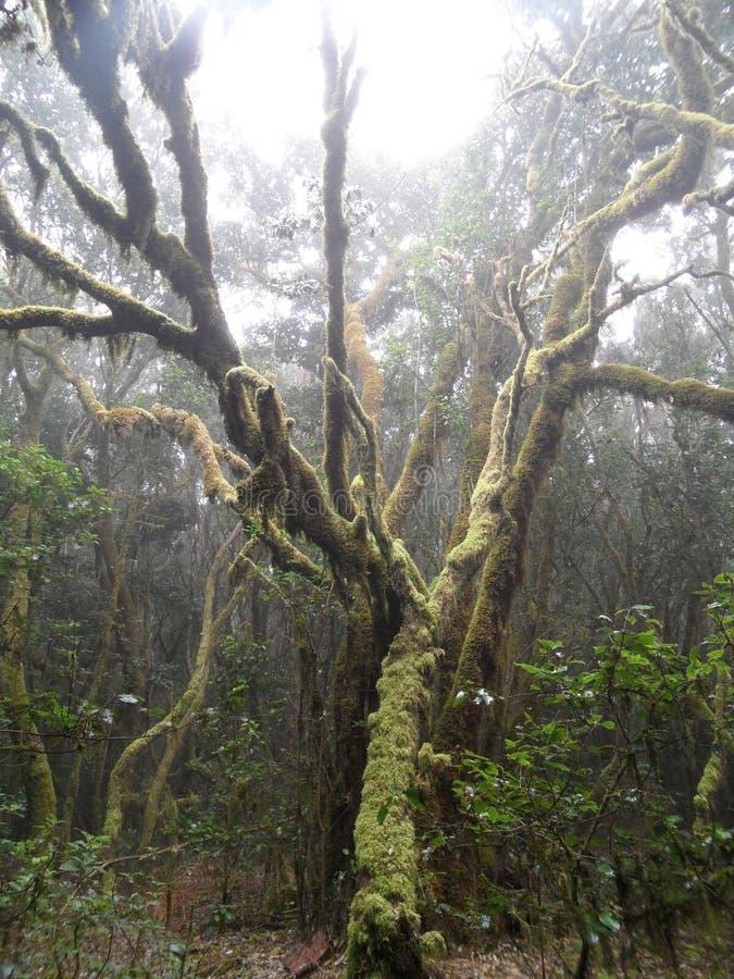 Mystisk rainforest arkivfoto