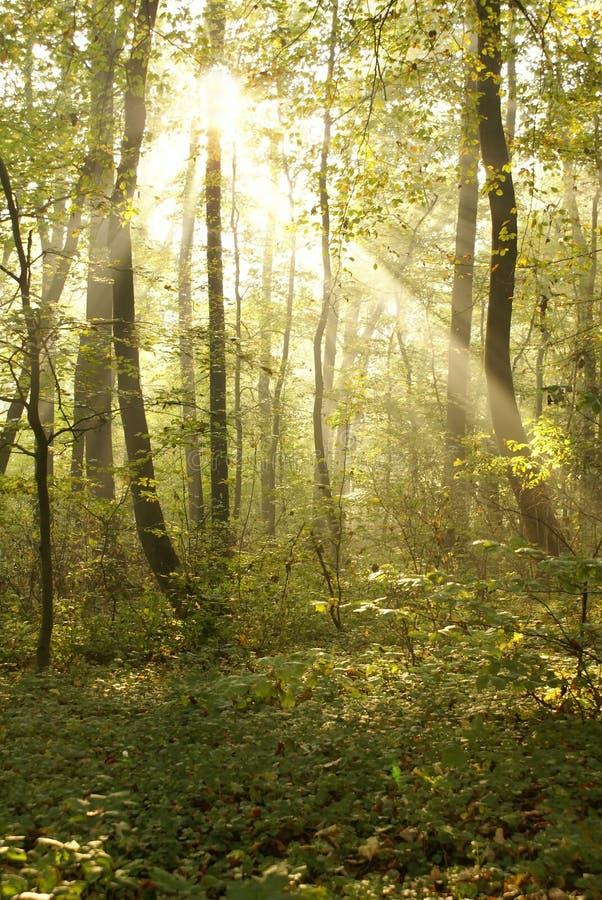 Mystisk skog arkivbilder