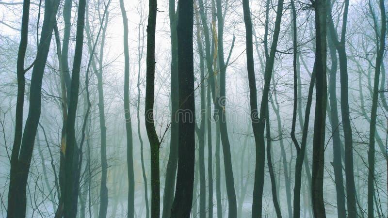 Mystisk skog arkivbild