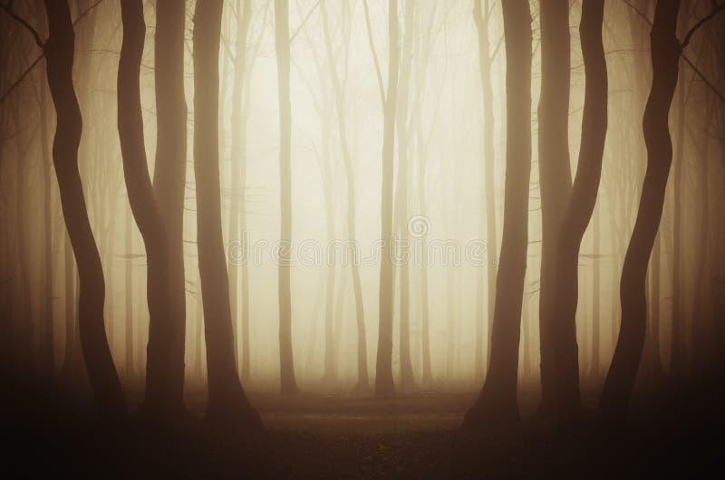 Mystisk skog med mist på gryning royaltyfria bilder