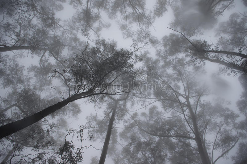 mystisk sky för dimmig skog royaltyfri foto