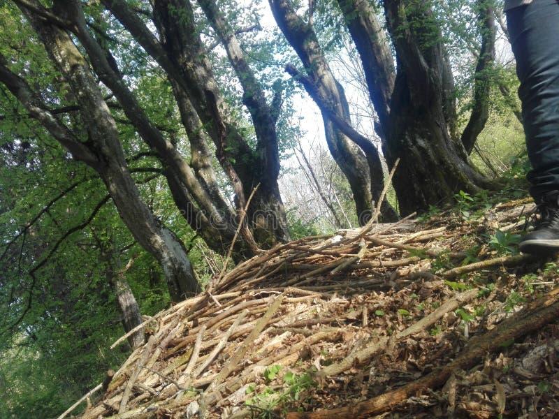 8 mystiska träd royaltyfria foton
