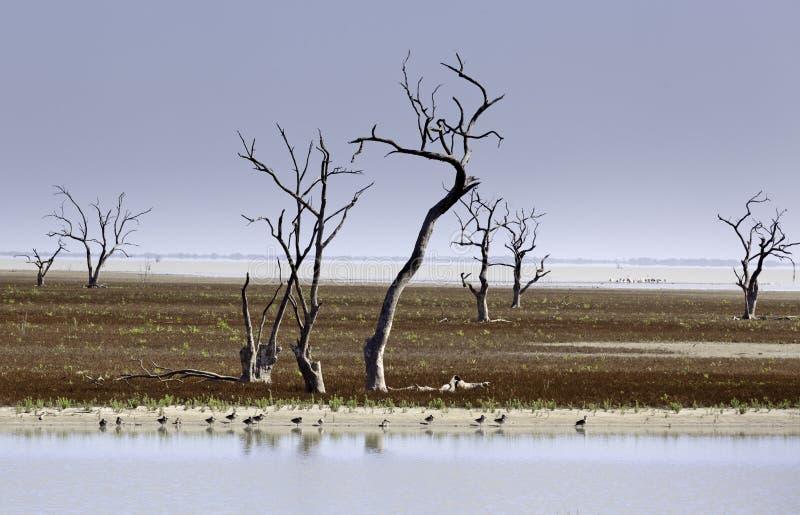 Mystrious döda trädMenindee sjöar Australien royaltyfri fotografi
