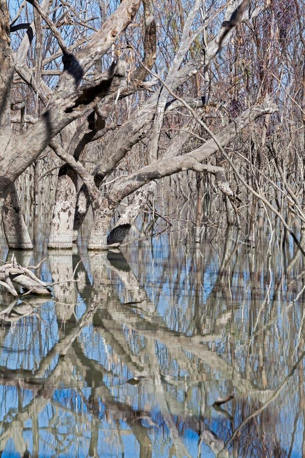 Mystrious döda trädMenindee sjöar Australien royaltyfri bild