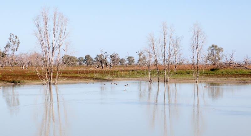Mystrious döda trädMenindee sjöar Australien royaltyfria foton