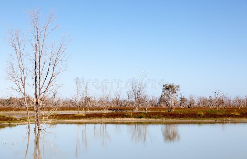 Mystrious döda trädMenindee sjöar Australien royaltyfria bilder