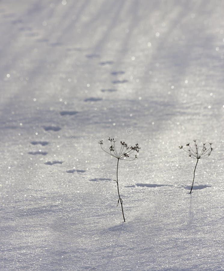 Mysz ślada w śniegu obraz royalty free