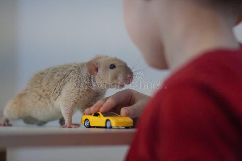 Mysz i chłopiec Przyjaźń między dzieckiem i zwierzęciem fotografia stock