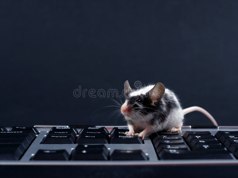 mysz keybord zdjęcia stock