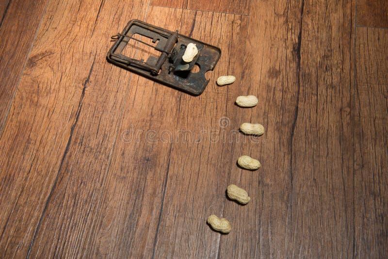 Mysz oklepiec zdjęcie stock