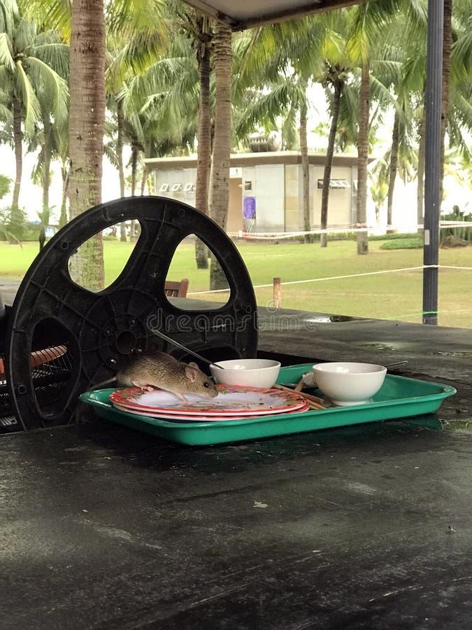 Mysz w talerzu je jedzenie Kambodża obraz royalty free
