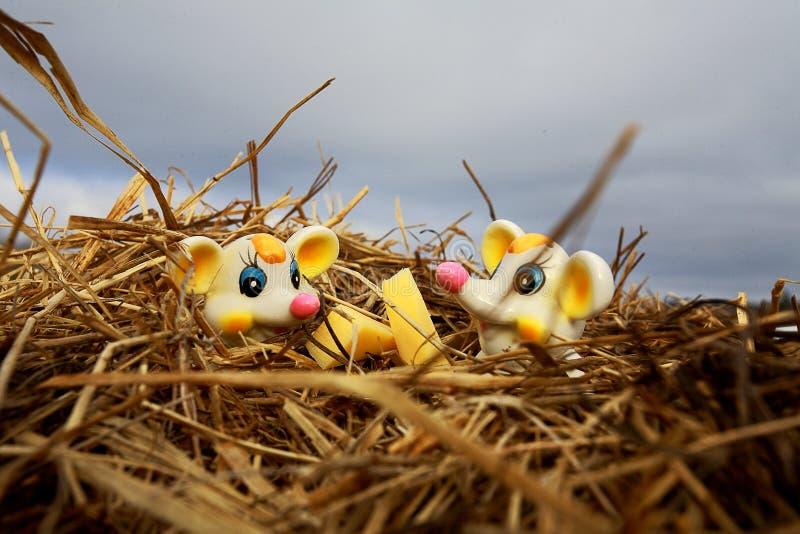 Myszy Siedzi w słomie obrazy royalty free