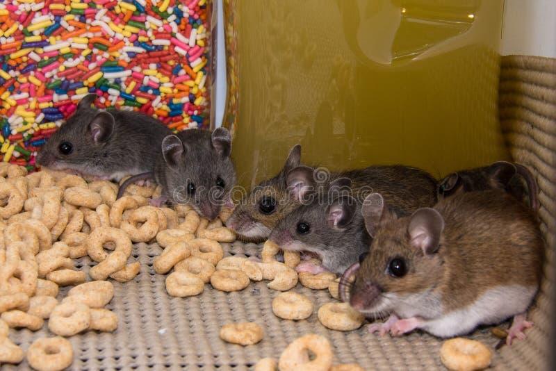 * myszy w kuchennym gabinecie obrazy stock