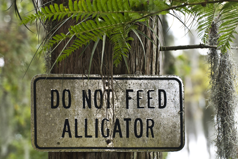 Não alimente Aligators imagem de stock