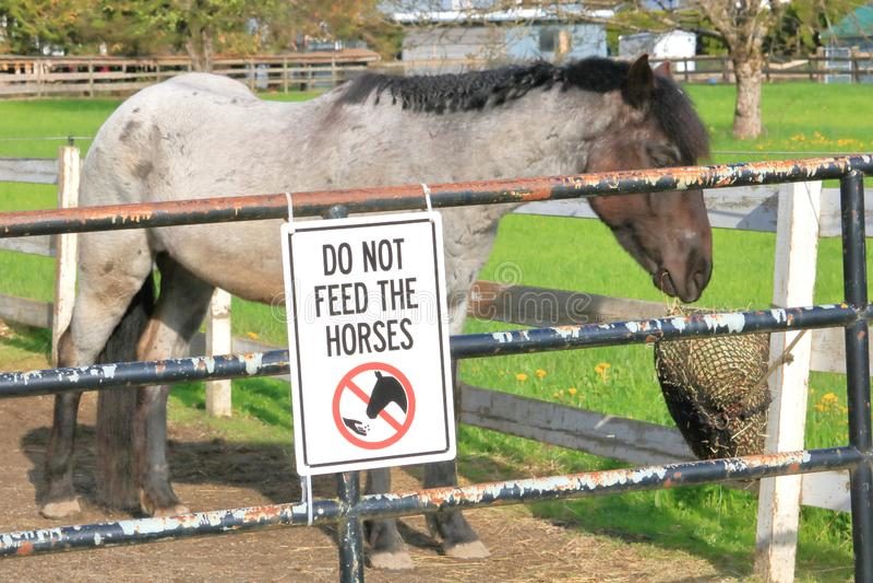 Não alimente a cavalos a afixação foto de stock