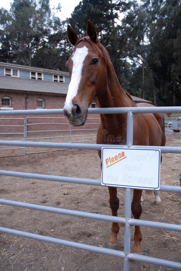 Não alimente os cavalos imagem de stock