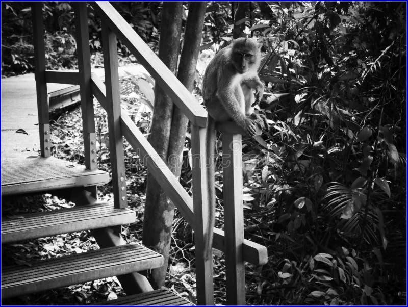 não alimente os macacos fotos de stock