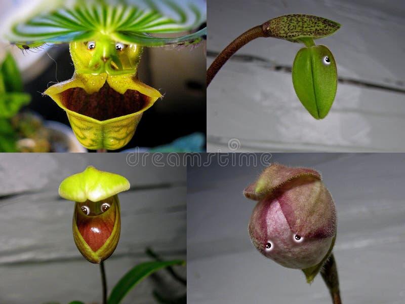 Não 8 colagem 'povos da orquídea ' fotos de stock royalty free
