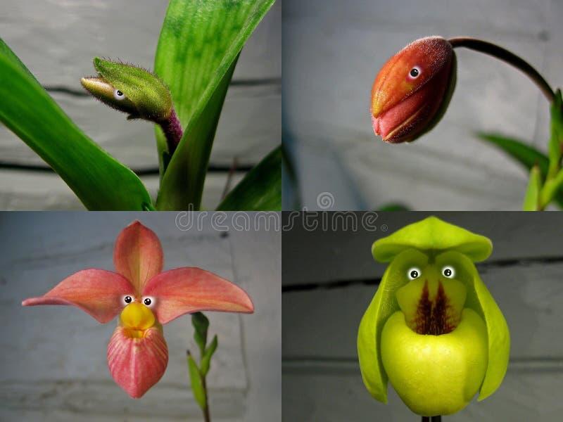 Não 4 colagem 'povos da orquídea ' imagens de stock