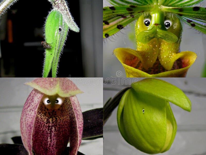 Não 1 colagem 'povos da orquídea ' imagens de stock royalty free