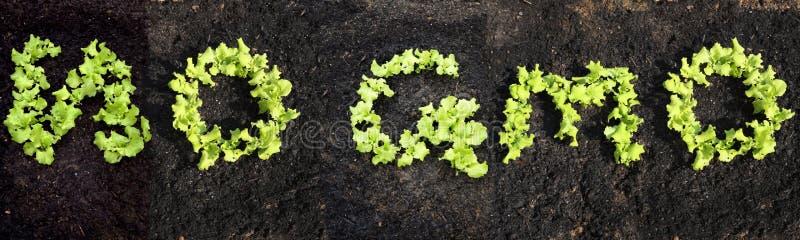 Não exprima NENHUM GMO foto de stock royalty free