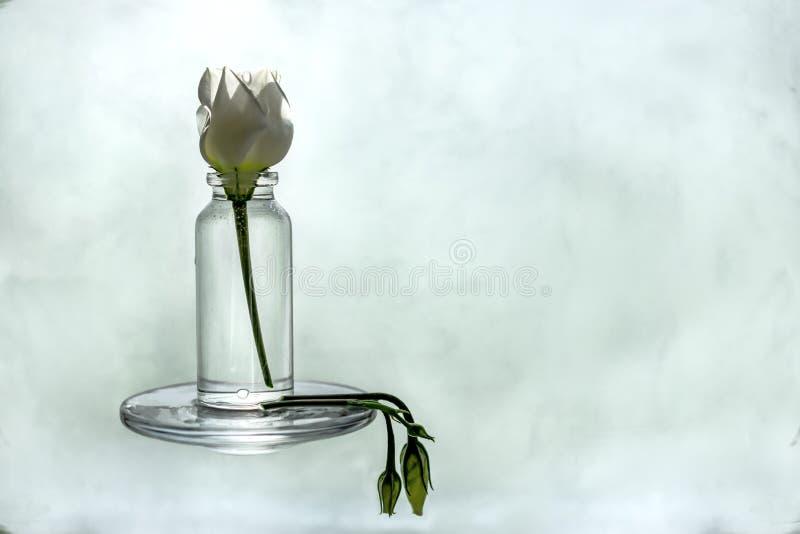 Não há nenhuma vida para uma flor sem água fotos de stock