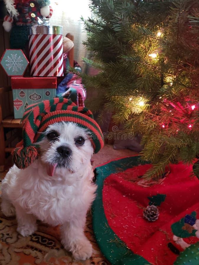Não me esqueça, Santa! foto de stock