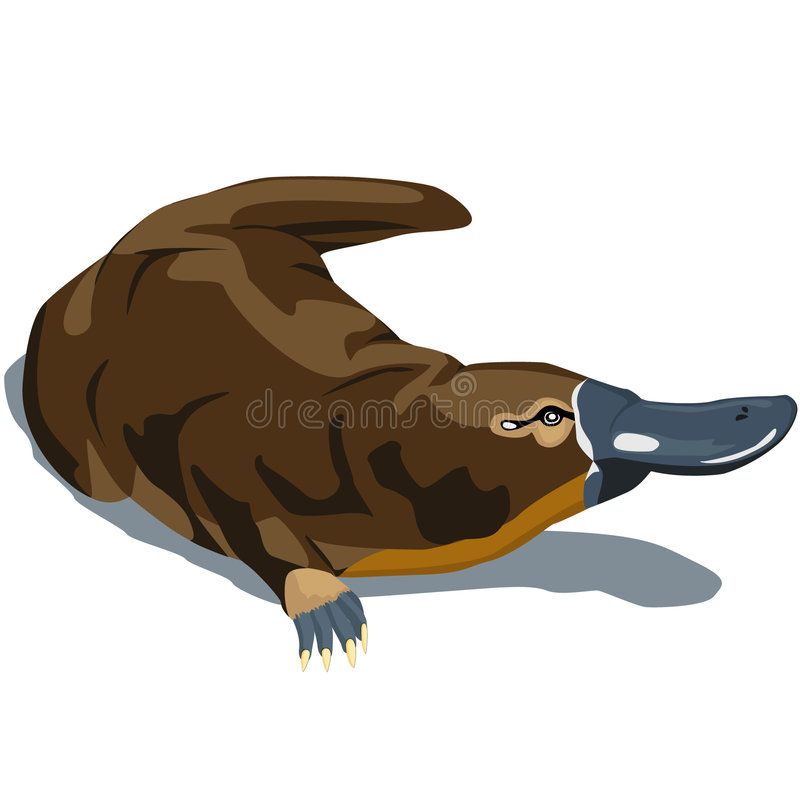näbbdjur vektor illustrationer