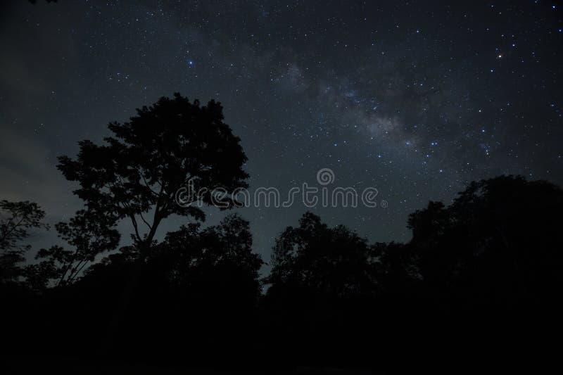 Nächtlicher Himmel mit der Milchstraße über dem Wald und den Bäumen stockbild