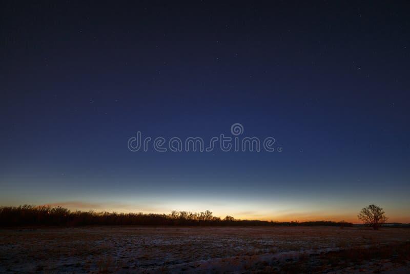 Nächtlicher Himmel mit Sternen Ein Baum vor dem hintergrund des morni lizenzfreies stockbild