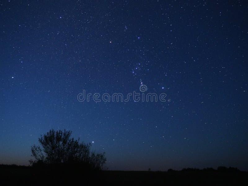 Nächtlicher Himmel spielt das Orions-Konstellationsbeobachten die Hauptrolle stockfotos